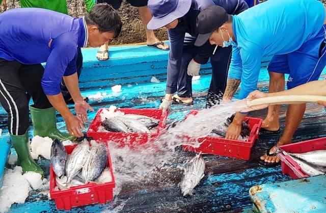 Khánh Hòa: Ngư dân trúng đậm lộc biển, thu về 100-200 triệu đồng đầu xuân - 1