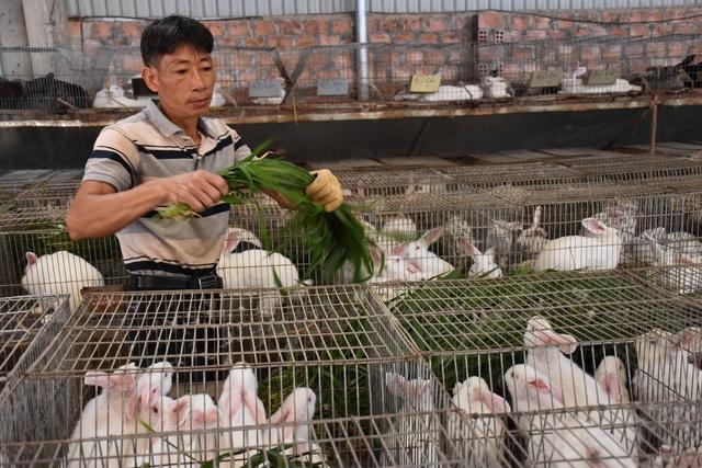 Lão nông mày mò nuôi thỏ thương phẩm, thu về hàng trăm triệu mỗi năm - 1