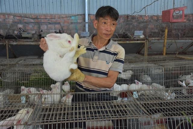 Lão nông mày mò nuôi thỏ thương phẩm, thu về hàng trăm triệu mỗi năm - 3
