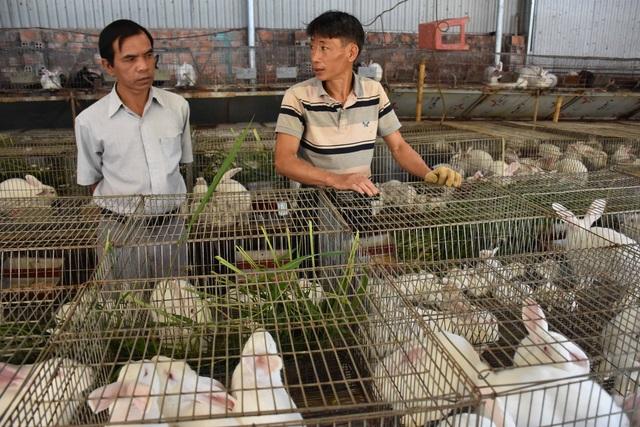 Lão nông mày mò nuôi thỏ thương phẩm, thu về hàng trăm triệu mỗi năm - 2