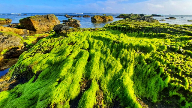 The enchanting beauty of the moss field in Ly Son - 1