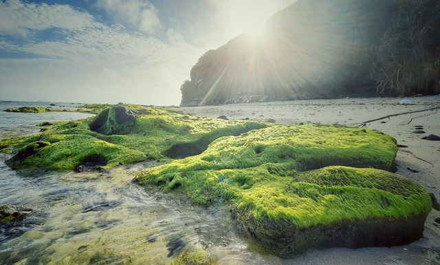 The enchanting beauty of the moss field in Ly Son - 3