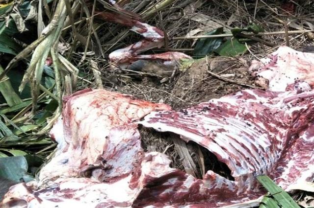 Hơn 30 trâu, bò bị nhóm đối tượng nhử vào rừng, xẻ thịt mang về bán - 4