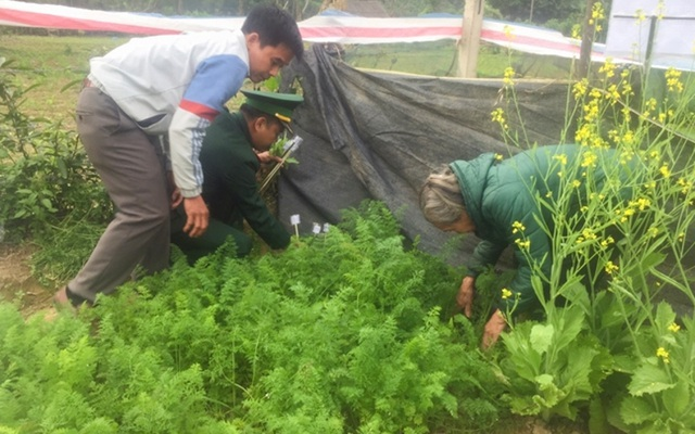 Trồng cây thuốc phiện trong vườn nhà để... nấu canh ăn hàng ngày - 1