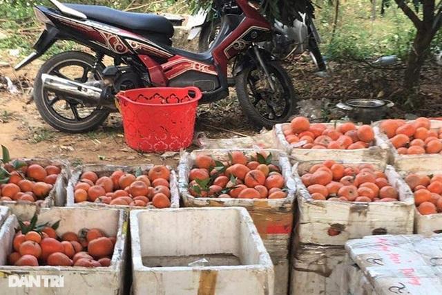 Rau củ thối rữa vứt đầy ruộng, nông dân Chí Linh nợ cả tỷ đồng tiền vay vốn - 3