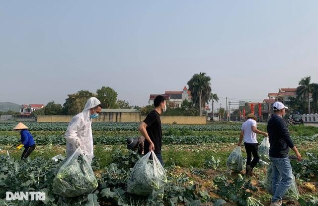 Rau củ thối rữa vứt đầy ruộng, nông dân Chí Linh nợ cả tỷ đồng tiền vay vốn - 10