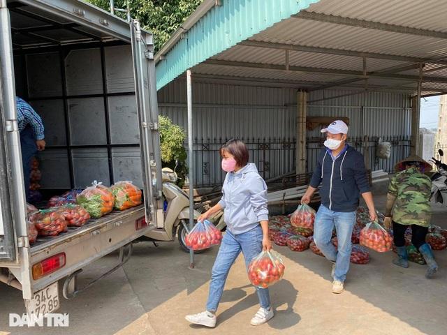 Rau củ thối rữa vứt đầy ruộng, nông dân Chí Linh nợ cả tỷ đồng tiền vay vốn - 12