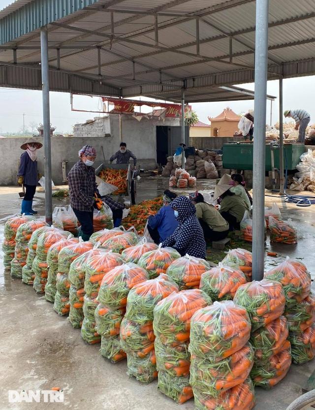 Rau củ thối rữa vứt đầy ruộng, nông dân Chí Linh nợ cả tỷ đồng tiền vay vốn - 11