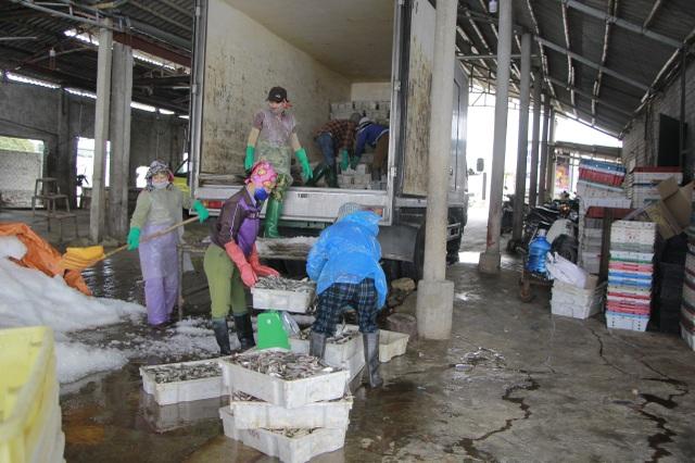 Ngư dân xứ Nghệ kiếm tiền triệu mỗi ngày, nhờ được mùa cá trích - 9