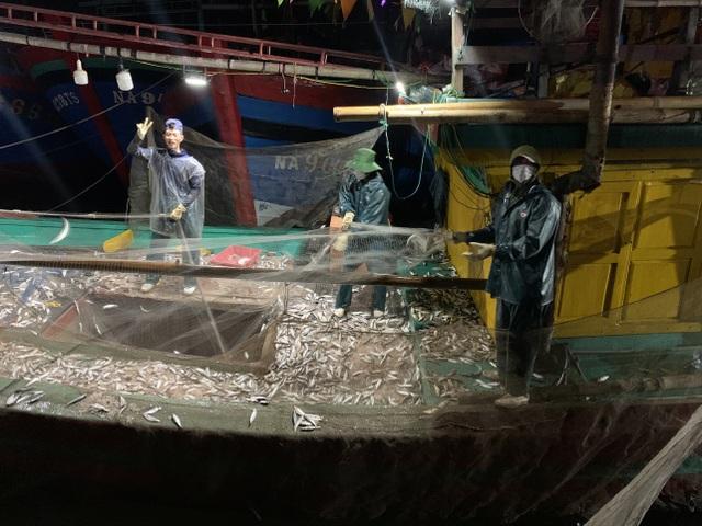 Ngư dân xứ Nghệ kiếm tiền triệu mỗi ngày, nhờ được mùa cá trích - 2