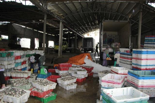 Ngư dân xứ Nghệ kiếm tiền triệu mỗi ngày, nhờ được mùa cá trích - 8