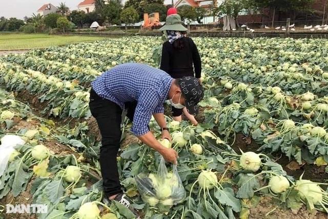 Rau củ thối rữa vứt đầy ruộng, nông dân Chí Linh nợ cả tỷ đồng tiền vay vốn - 5