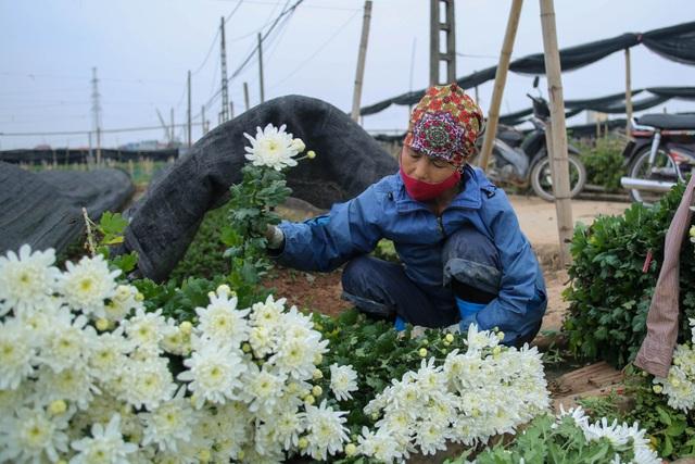 Ế ẩm vì dịch, hoa chết khô giữa đồng, bị vứt bỏ như rác - 3