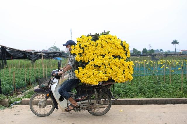 Ế ẩm vì dịch, hoa chết khô giữa đồng, bị vứt bỏ như rác - 10