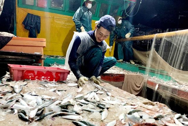 Ngư dân xứ Nghệ kiếm tiền triệu mỗi ngày, nhờ được mùa cá trích - 6