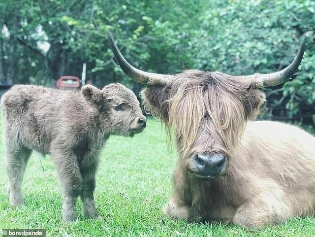 Cô gái xinh đẹp chi hơn 1 tỷ đồng để giải cứu và chăm sóc 200 vật nuôi - 12