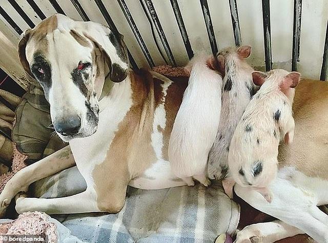 Cô gái xinh đẹp chi hơn 1 tỷ đồng để giải cứu và chăm sóc 200 vật nuôi - 13