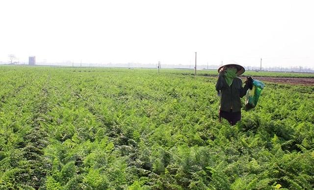 Hải Dương cấp thẻ cho nông dân ra đồng - 2