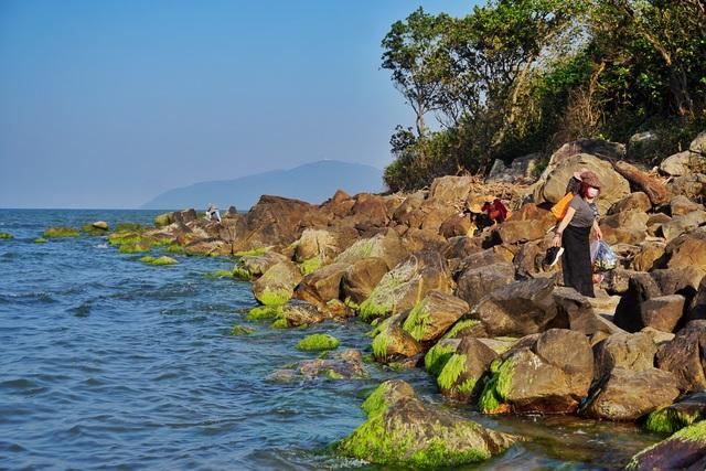 Mùa rêu xanh tại Rạn Nam Ô Đà Nẵng hút du khách check-in đầu năm - 6