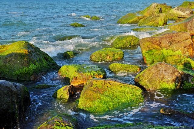 Mùa rêu xanh tại Rạn Nam Ô Đà Nẵng hút du khách check-in đầu năm - 9