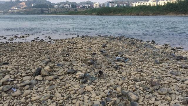 Nước sông Hồng bất ngờ đổi màu trong xanh như ngọc - 2