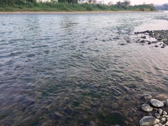Nước sông Hồng bất ngờ đổi màu trong xanh như ngọc - 6