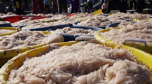 Ngư dân Bình Định kiếm cả chục triệu đồng chỉ vài giờ ra khơi - 1