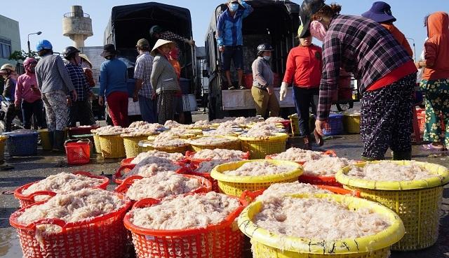 Ngư dân Bình Định kiếm cả chục triệu đồng chỉ vài giờ ra khơi - 5