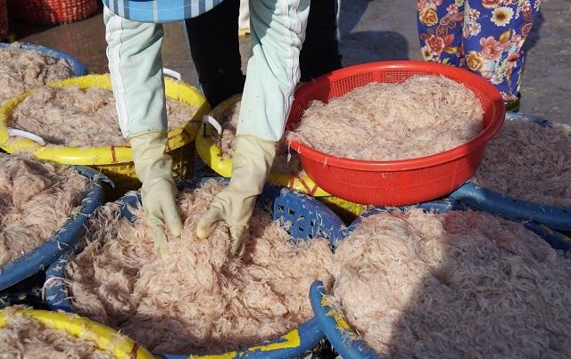 Ngư dân Bình Định kiếm cả chục triệu đồng chỉ vài giờ ra khơi - 6