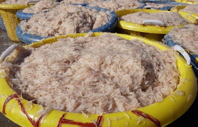 Ngư dân Bình Định kiếm cả chục triệu đồng chỉ vài giờ ra khơi - 7
