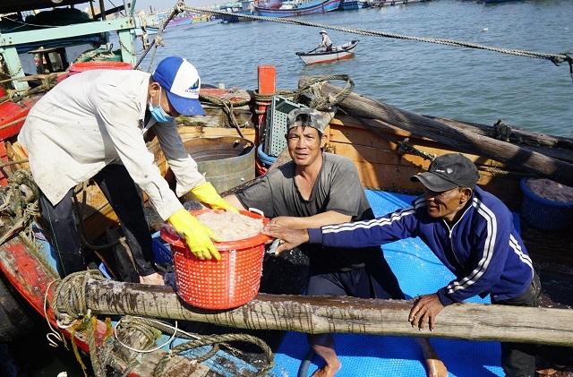 Ngư dân Bình Định kiếm cả chục triệu đồng chỉ vài giờ ra khơi - 3