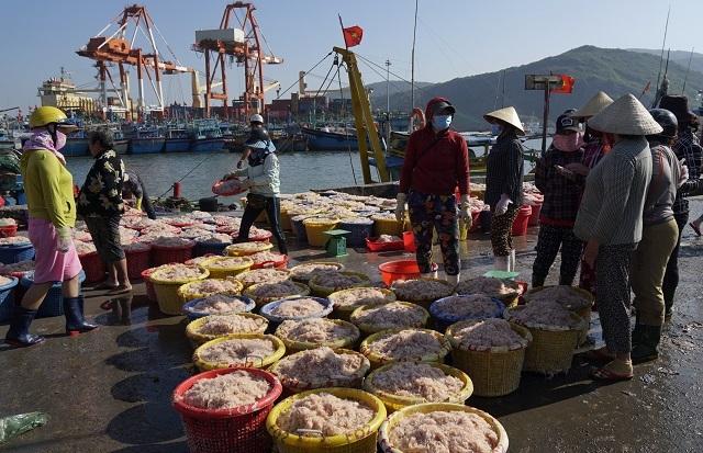Ngư dân Bình Định kiếm cả chục triệu đồng chỉ vài giờ ra khơi - 4