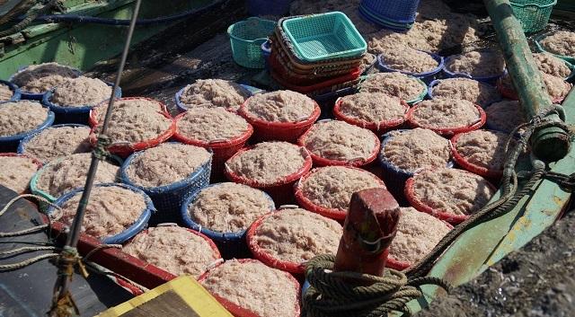 Ngư dân Bình Định kiếm cả chục triệu đồng chỉ vài giờ ra khơi - 2