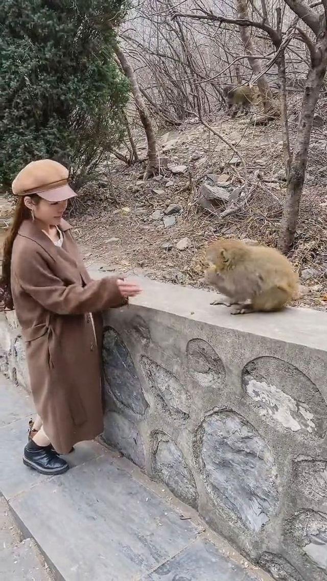 Clip: Đang duyên dáng cho khỉ ăn, cô gái bị giật phăng tóc giả - 1