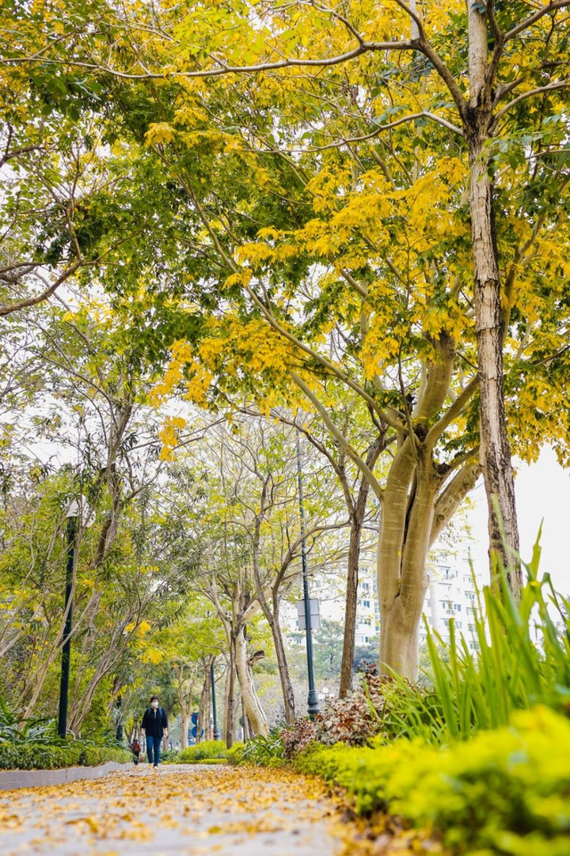 Ấn tượng sắc xuân tại Ciputra Hanoi - 1