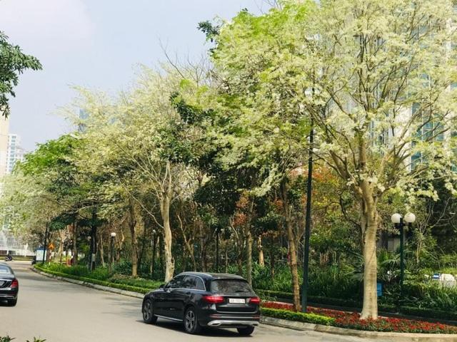Ấn tượng sắc xuân tại Ciputra Hanoi - 3
