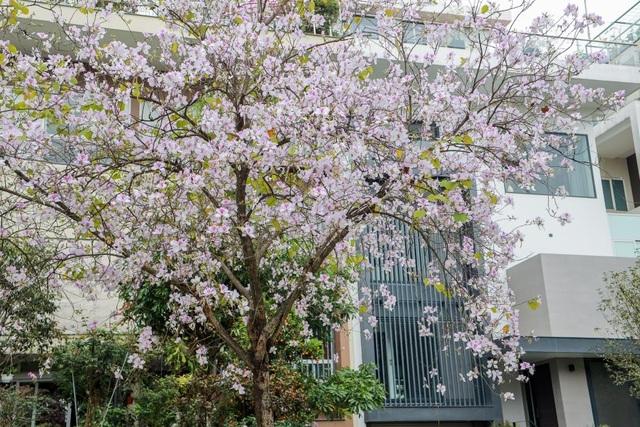 Ấn tượng sắc xuân tại Ciputra Hanoi - 6