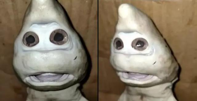 Ngư dân bối rối khi bắt được cá mập có khuôn mặt người - 1