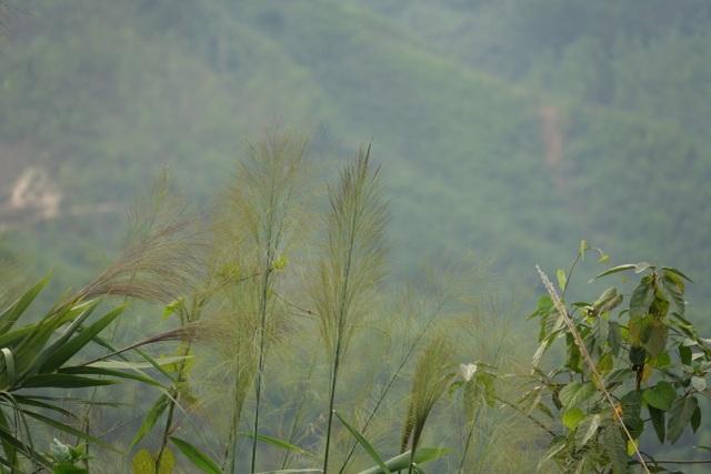 Quảng Ngãi: Lên non hái lộc của rừng - 1