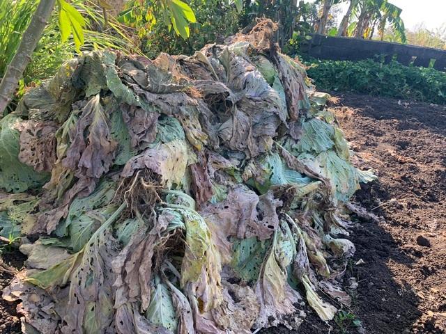 Nông dân vuốt nước mắt đổ hàng trăm tấn rau củ vì không ai mua - 4