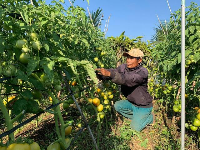 Nông dân vuốt nước mắt đổ hàng trăm tấn rau củ vì không ai mua - 6