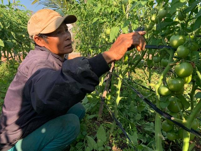 Nông dân vuốt nước mắt đổ hàng trăm tấn rau củ vì không ai mua - 7