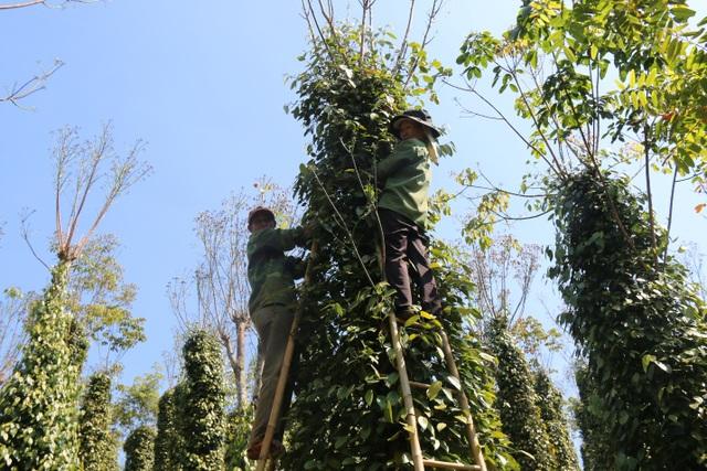 Hàng trăm người tất bật vào việc ăn cơm dưới đất, làm việc trên cây... - 2