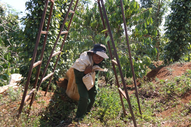 Hàng trăm người tất bật vào việc ăn cơm dưới đất, làm việc trên cây... - 4
