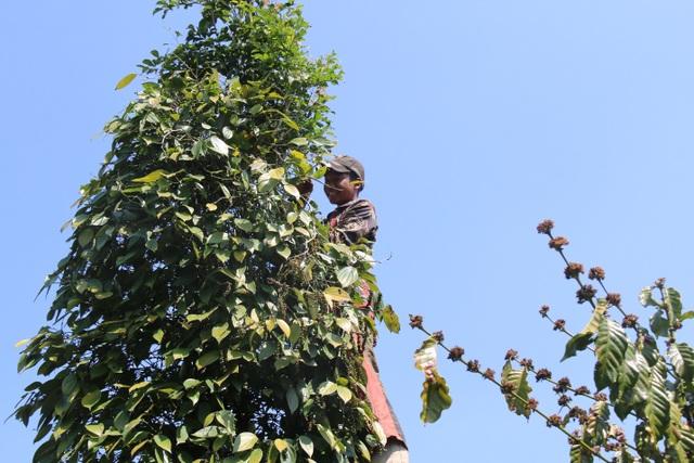 Hàng trăm người tất bật vào việc ăn cơm dưới đất, làm việc trên cây... - 5