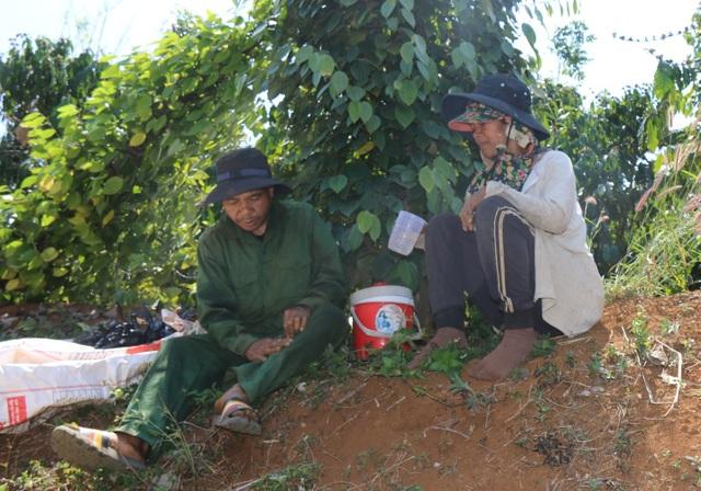 Hàng trăm người tất bật vào việc ăn cơm dưới đất, làm việc trên cây... - 6