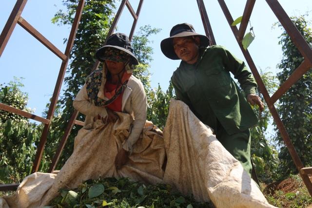 Hàng trăm người tất bật vào việc ăn cơm dưới đất, làm việc trên cây... - 7