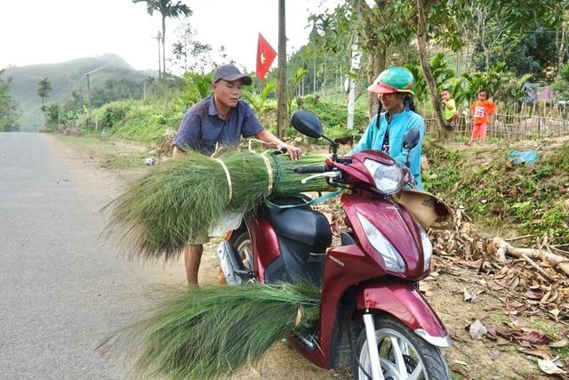Quảng Ngãi: Lên non hái lộc của rừng - 2