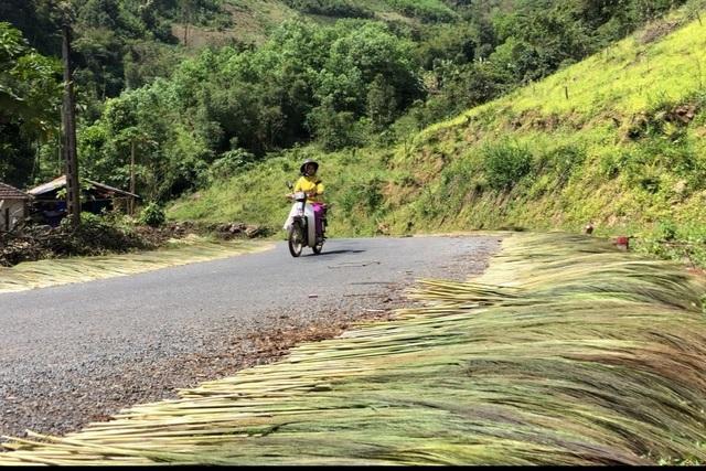 Quảng Ngãi: Lên non hái lộc của rừng - 6