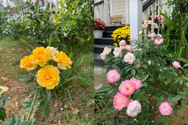 Vợ chồng trốn dịch về ngoại ô uống trà, ngắm hoa trong biệt thự đẹp mê - 10